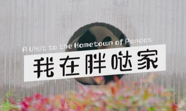 A Visit to the Homeland of Pandas 3:Knowledge about Giant Pandas_fororder_360截图20200826144745612