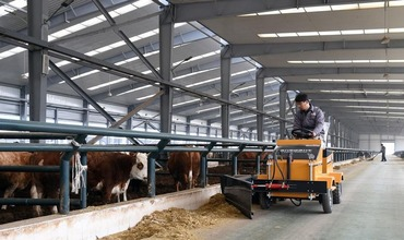 Modernized technology guarantees efficiency and quality of livestock breeding in Beijing
