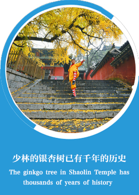 Zhengzhou City: Shaolin Kungfu has won a worldwide reputation and attracted foreign learners_fororder_2
