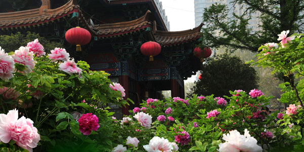 Luoyang International Peony Festival