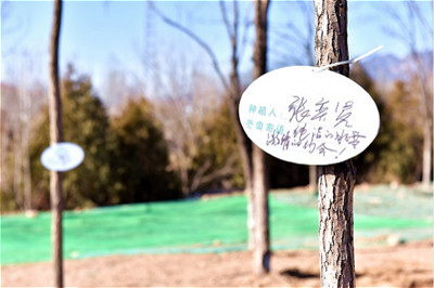 Yanqing: Construction officially restarts on the Winter Olympics Forest Park_fororder_延慶_1