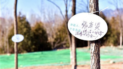 Yanqing: Construction officially restarts on the Winter Olympics Forest Park