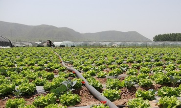 Beijing Yanqing has been promoting the cultivation of characteristic crops