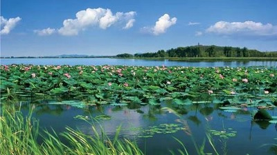 Tieling Lotus Wetland: creating the most beautiful business card of Tieling tourism in Liaoning Province, China