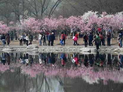 Cherry blossom cultural festival opens at Yuyuantan Park in Beijing
