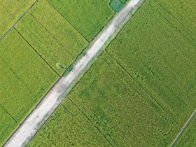 Luoyang: Aerial views show harvest across China