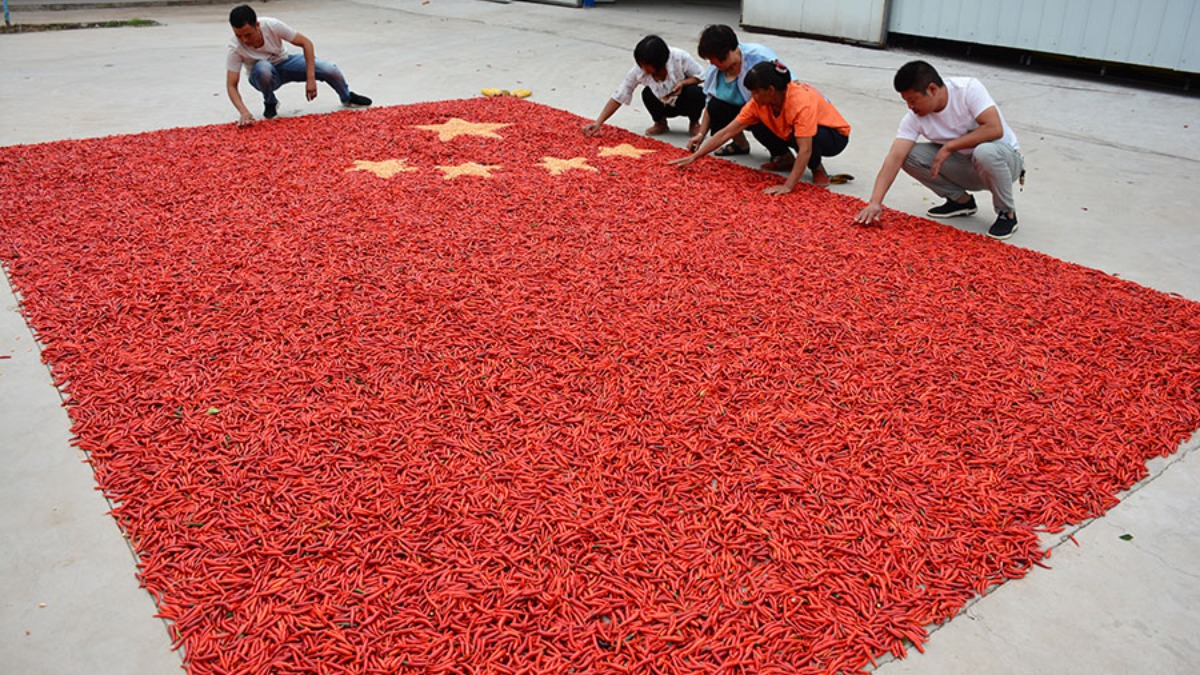Luoyang: Yichuan farmers make national flag with peppers