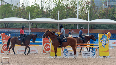 The last batch of horses for 7th CISM Military World Games Arrives in Wuhan_fororder_赛事报道1