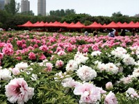 The 36th LuoYang Peony Festival opens at April 5th_fororder_5f0e47a0575a4453b37f33a900ae0c3a