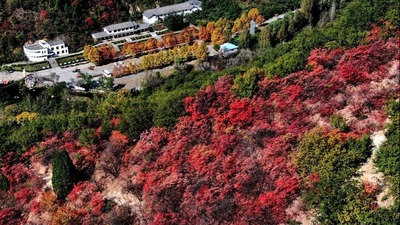 Scenery of red leaves on mountain in Luoyang
