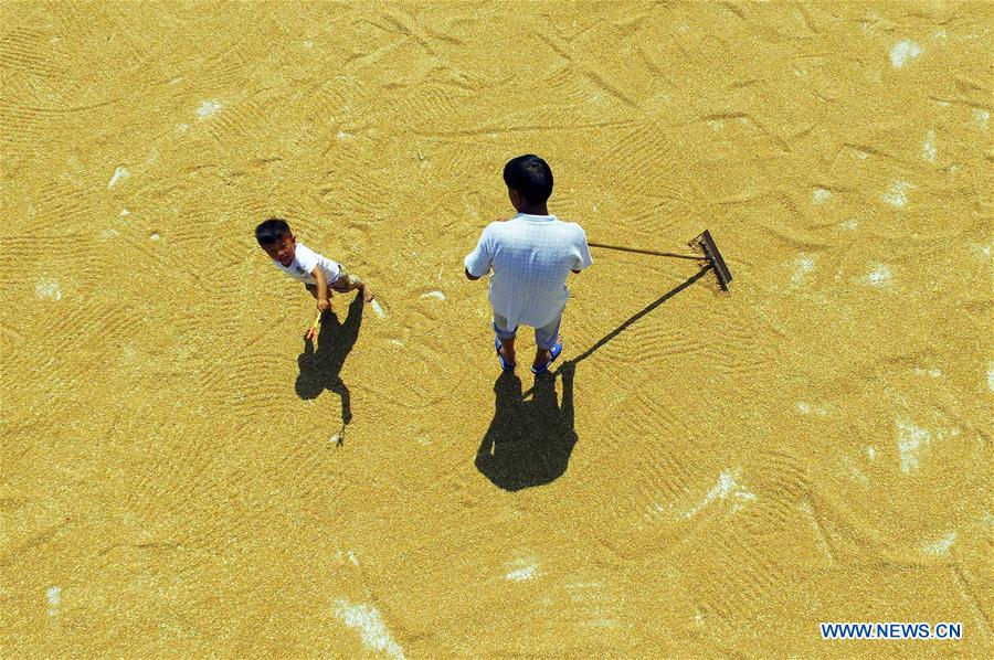 Farmers dry wheat in China's Hebei