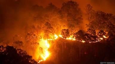 澳大利亚将对林火灾害展开最高级别调查_fororder_timg