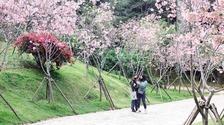 厦门海沧南北两处公园繁花盛放 吸引市民前去欣赏