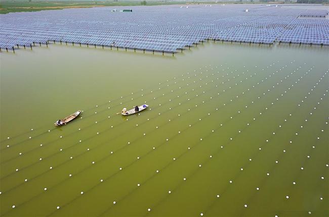 江苏泗洪:综合养殖巧生金